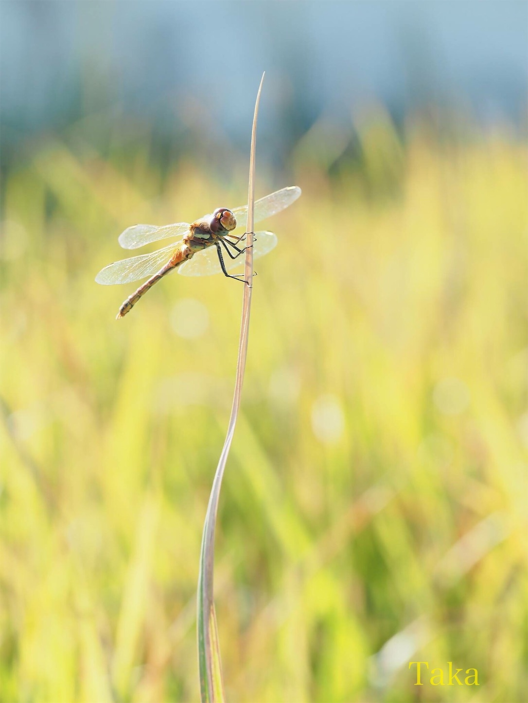 f:id:ButterflyTakaji:20181227045518j:image