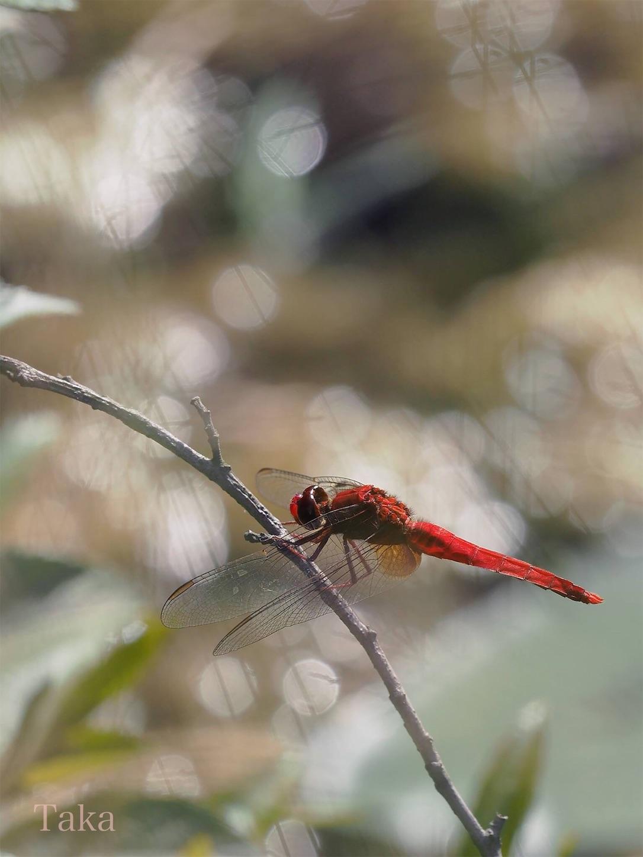 f:id:ButterflyTakaji:20181227045745j:image