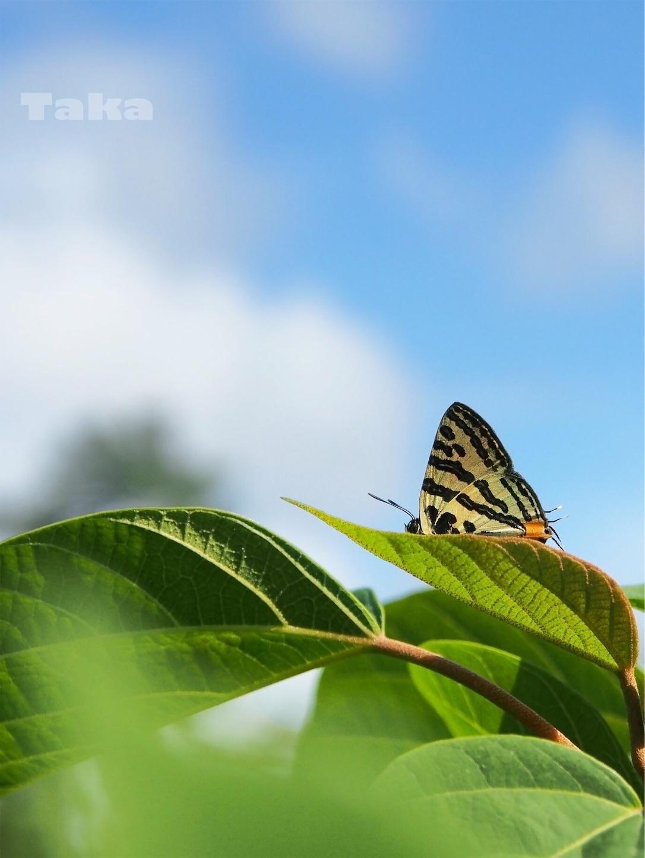 f:id:ButterflyTakaji:20181228165712j:image