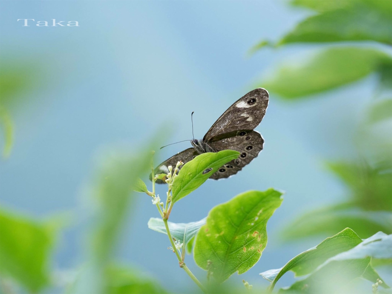 f:id:ButterflyTakaji:20181228165800j:image