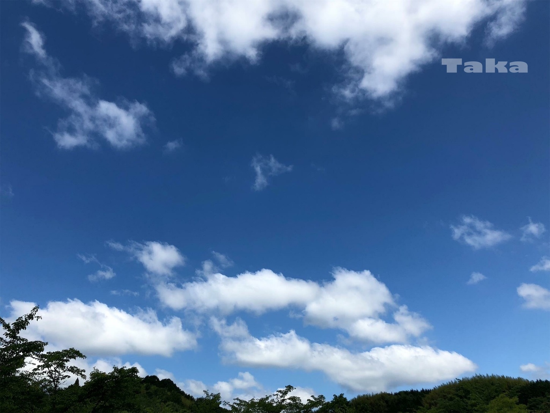 f:id:ButterflyTakaji:20181228165837j:image