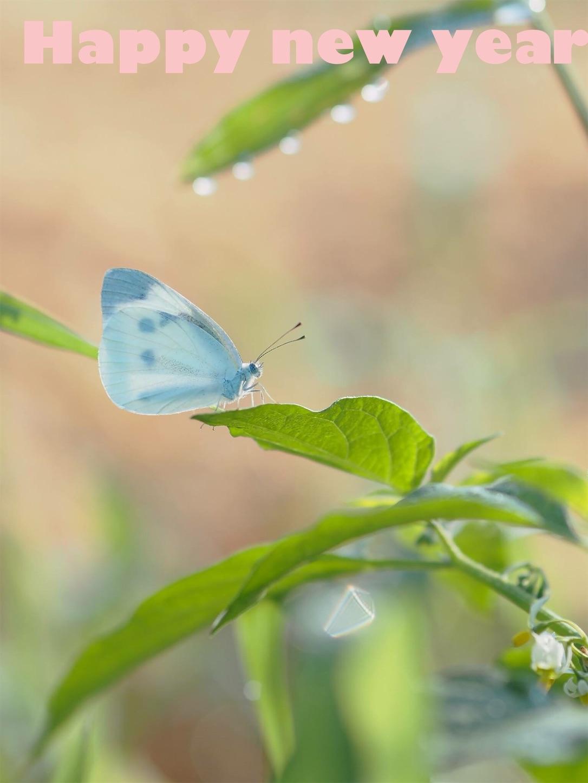 f:id:ButterflyTakaji:20181231195606j:image