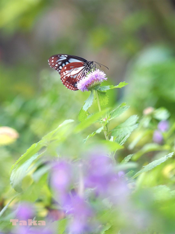 f:id:ButterflyTakaji:20181231195625j:image