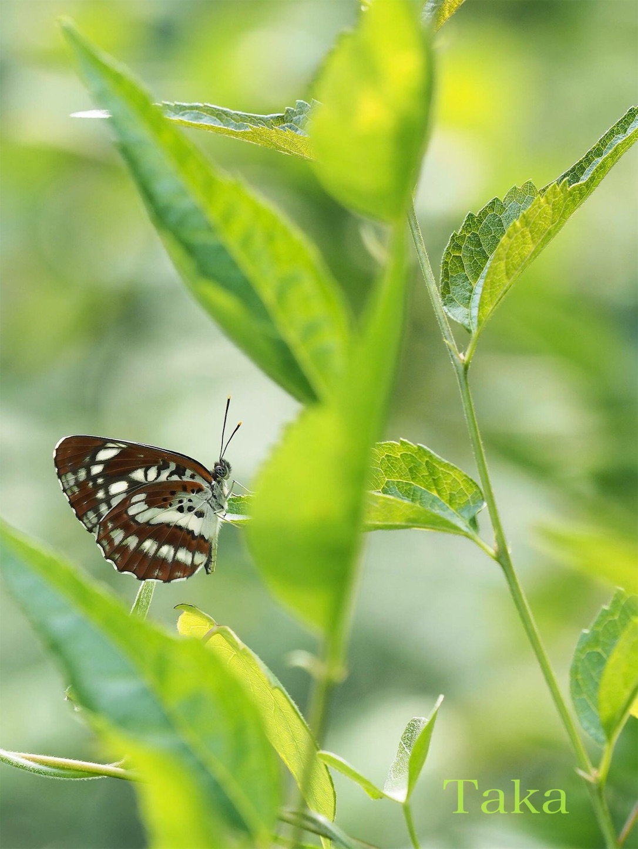 f:id:ButterflyTakaji:20181231195640j:image