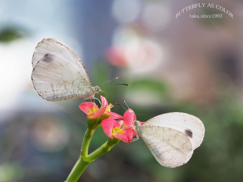 f:id:ButterflyTakaji:20181231195701j:image