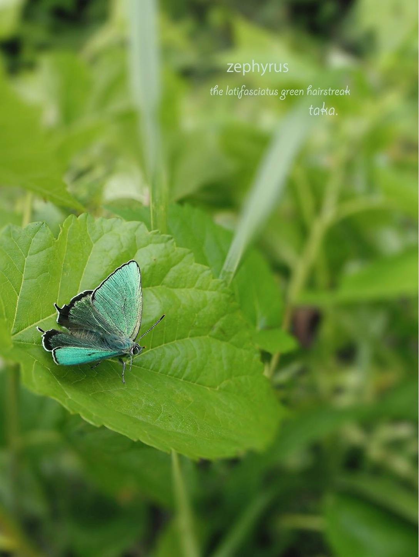 f:id:ButterflyTakaji:20190127042518j:image