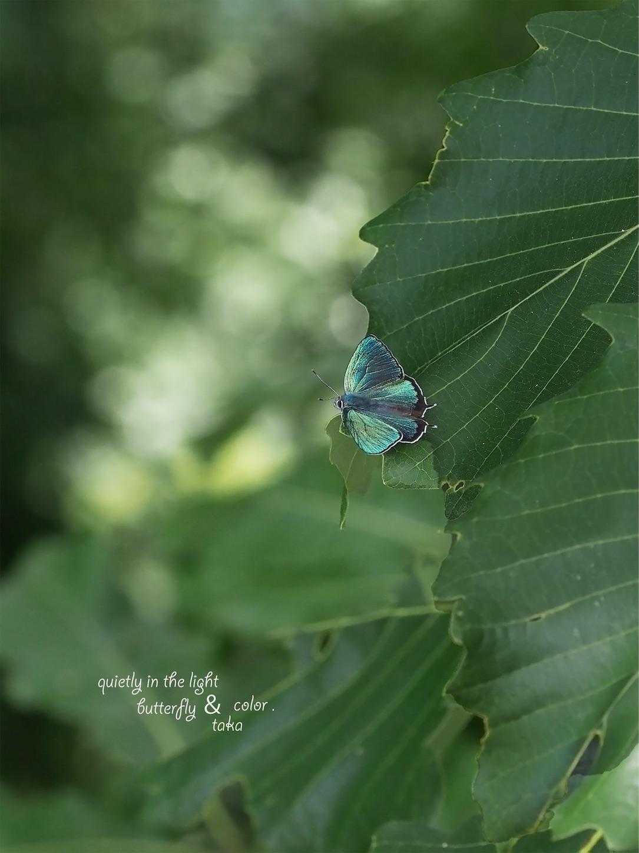 f:id:ButterflyTakaji:20190127042620j:image