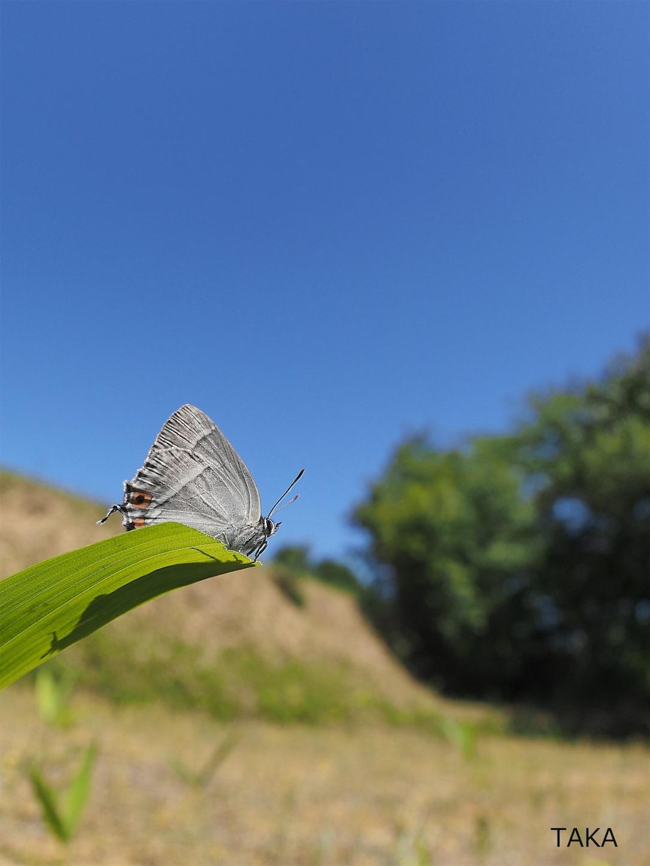 f:id:ButterflyTakaji:20190127042702j:image