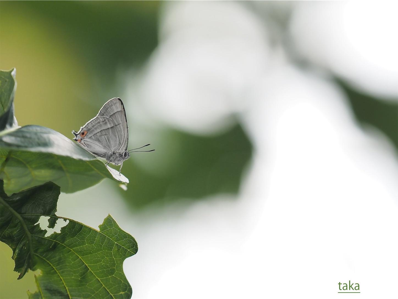 f:id:ButterflyTakaji:20190127042718j:image