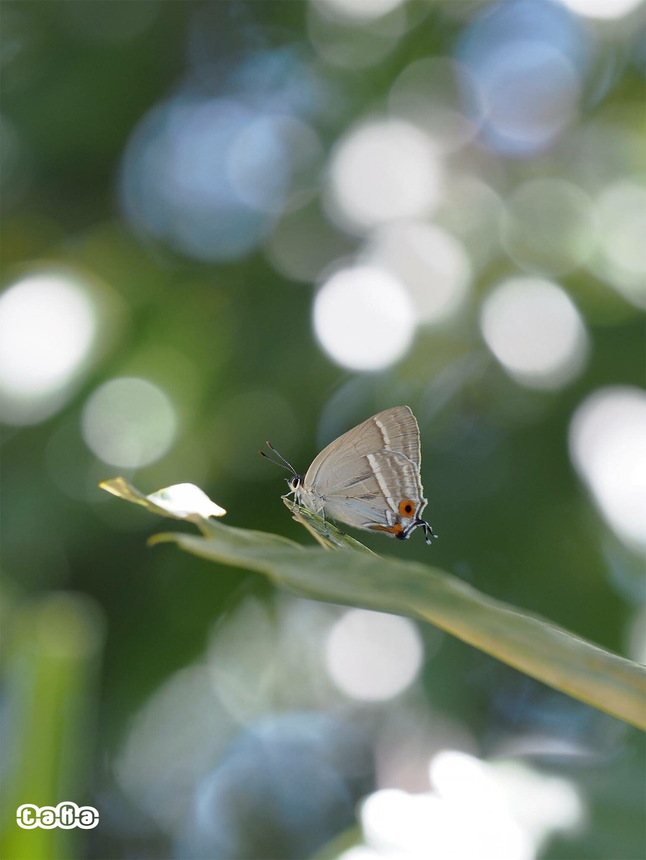f:id:ButterflyTakaji:20190127043301j:image