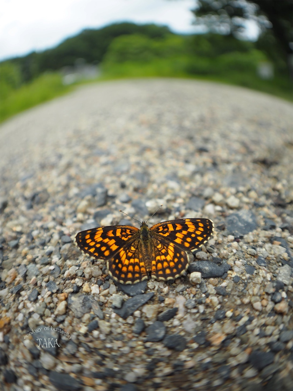 f:id:ButterflyTakaji:20190207143237j:image