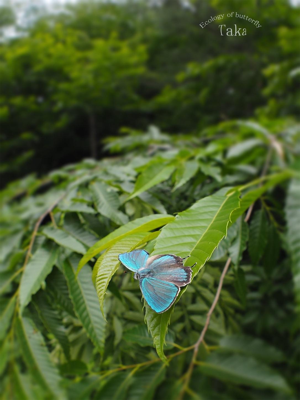 f:id:ButterflyTakaji:20190207143557j:image