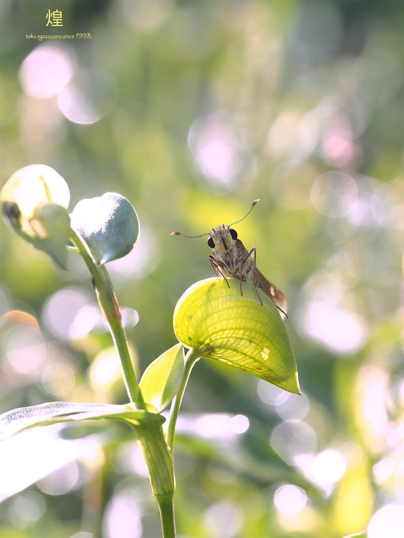 f:id:ButterflyTakaji:20190214055131j:image