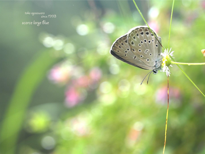 f:id:ButterflyTakaji:20190214164858j:image