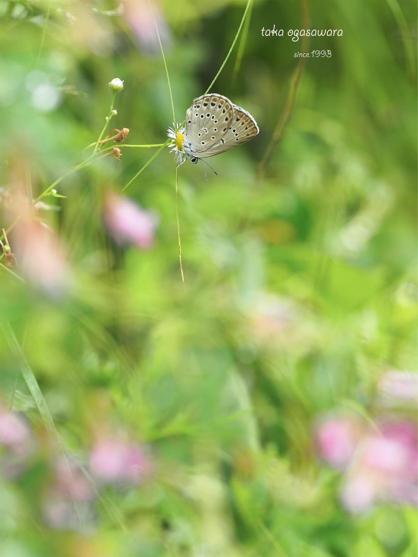 f:id:ButterflyTakaji:20190214164942j:image