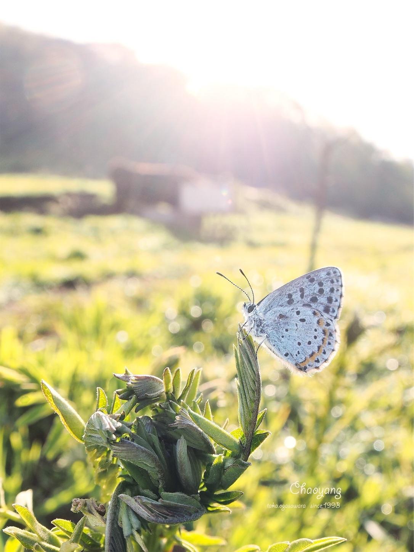 f:id:ButterflyTakaji:20190214164954j:image