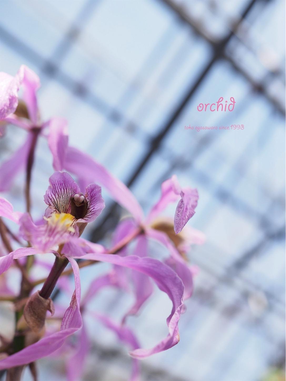 f:id:ButterflyTakaji:20190228062129j:image