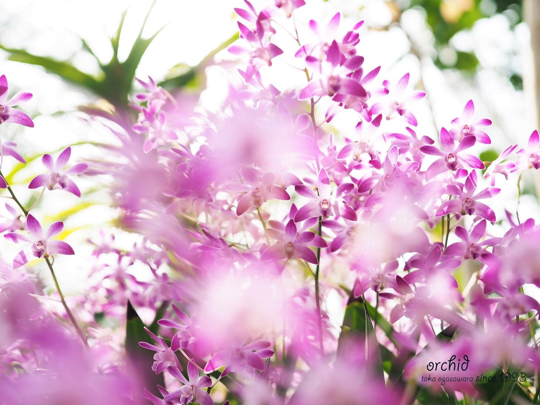 f:id:ButterflyTakaji:20190228062142j:image