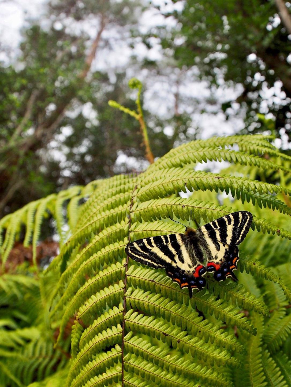 f:id:ButterflyTakaji:20190323051557j:image
