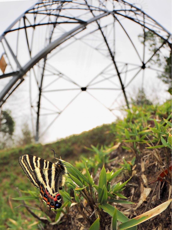 f:id:ButterflyTakaji:20190323191423j:image