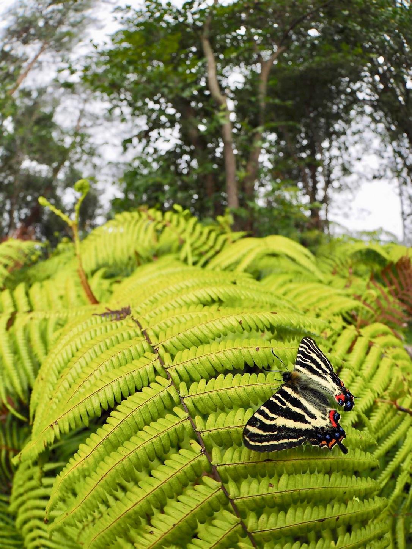 f:id:ButterflyTakaji:20190323191513j:image