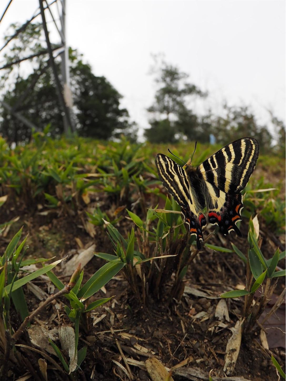 f:id:ButterflyTakaji:20190324005158j:image