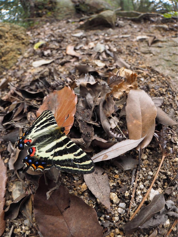 f:id:ButterflyTakaji:20190324005218j:image