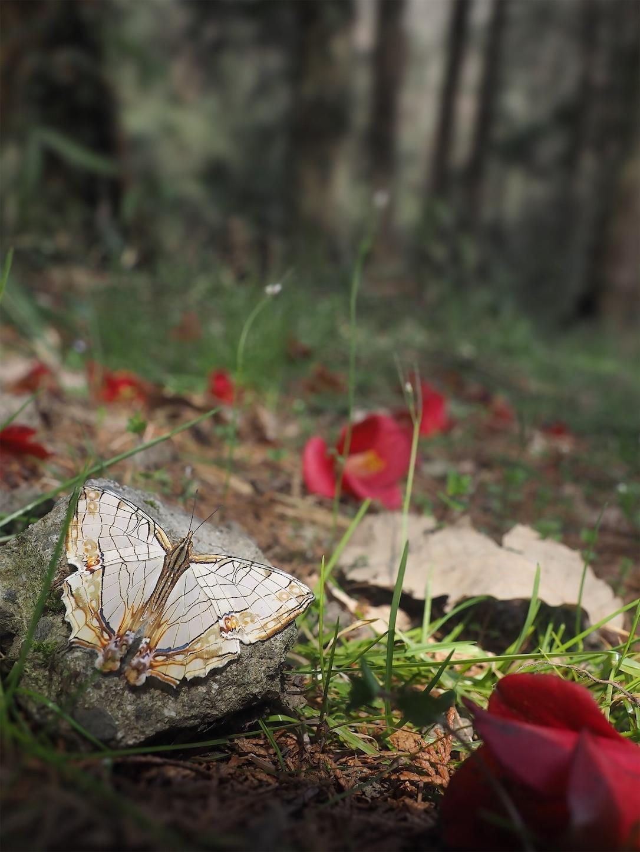 f:id:ButterflyTakaji:20190401134824j:image