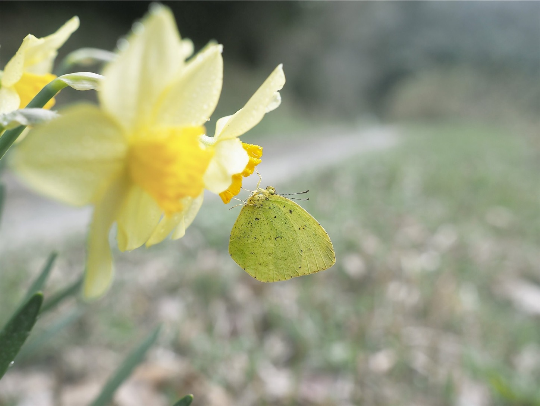 f:id:ButterflyTakaji:20190401141238j:image