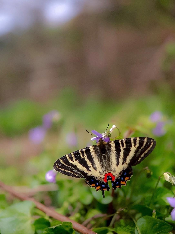 f:id:ButterflyTakaji:20190410011320j:image