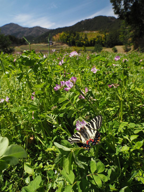 f:id:ButterflyTakaji:20190506130325j:image