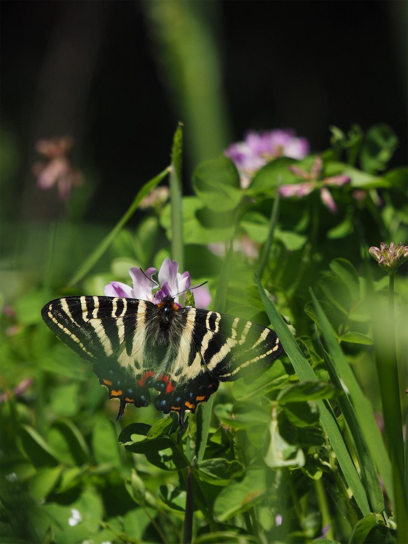 f:id:ButterflyTakaji:20190506130332j:image