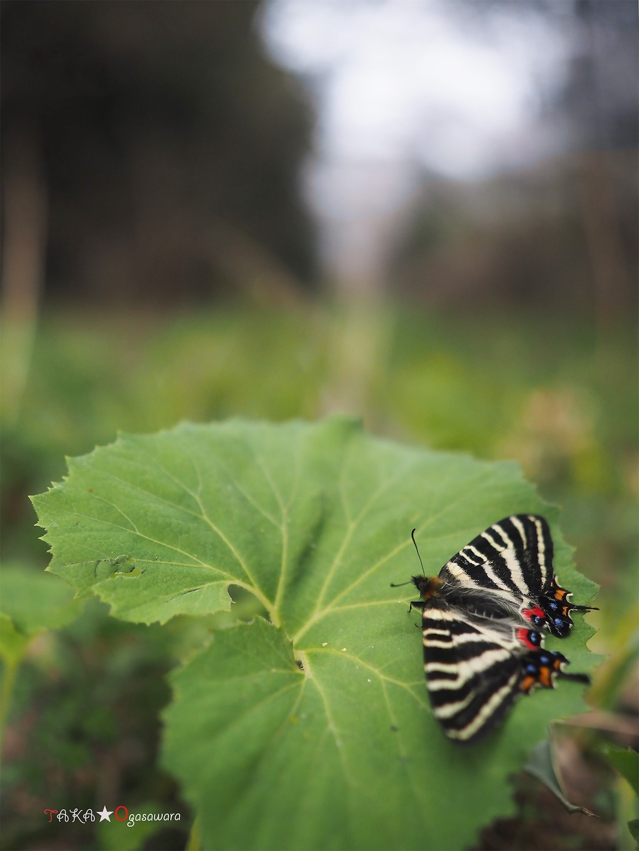 f:id:ButterflyTakaji:20190520213035j:image