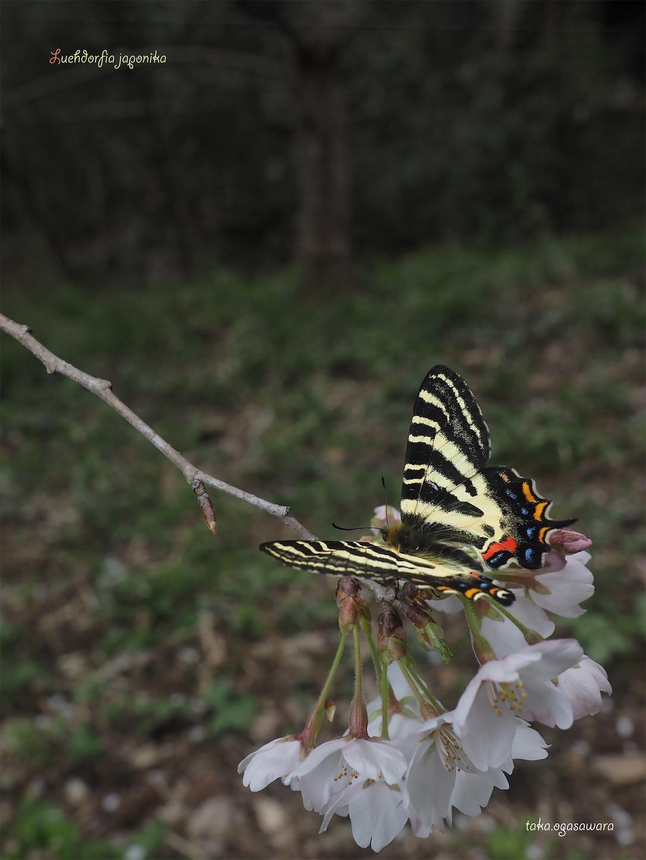f:id:ButterflyTakaji:20190520213108j:image