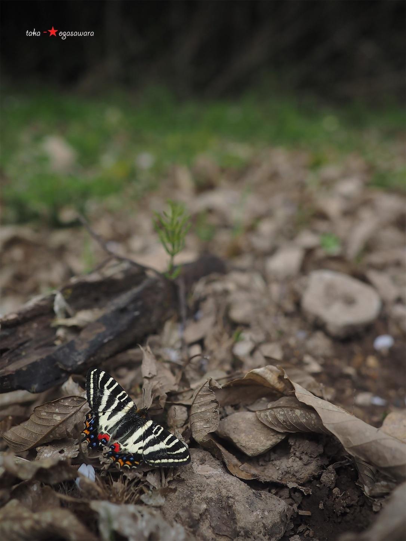 f:id:ButterflyTakaji:20190520213136j:image