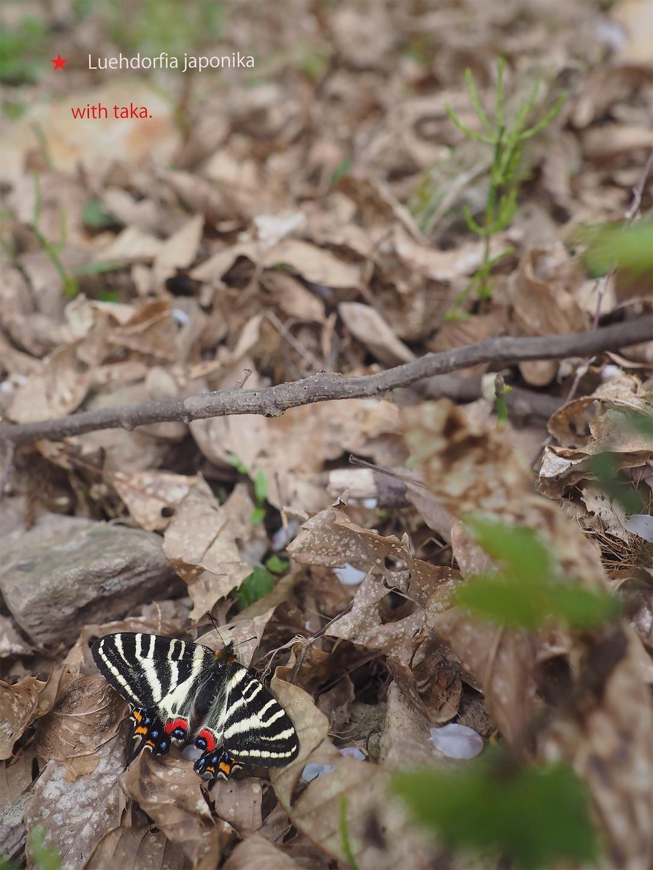 f:id:ButterflyTakaji:20190520213200j:image