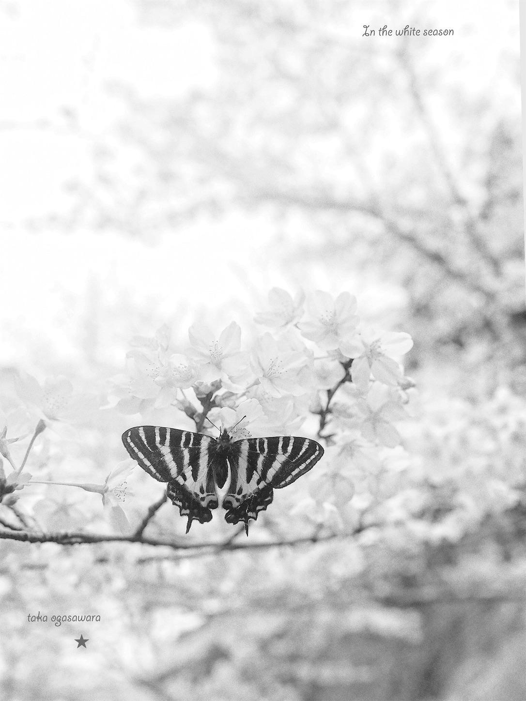 f:id:ButterflyTakaji:20190520213224j:image