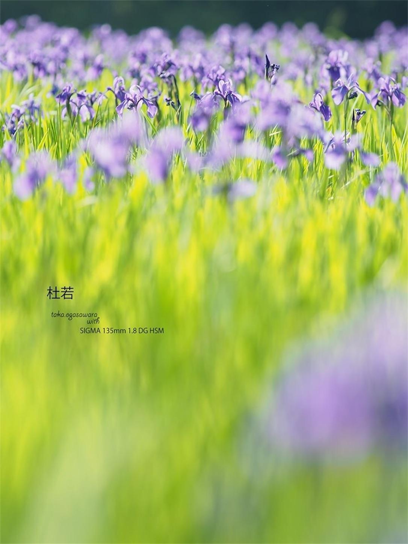 f:id:ButterflyTakaji:20190602194707j:image