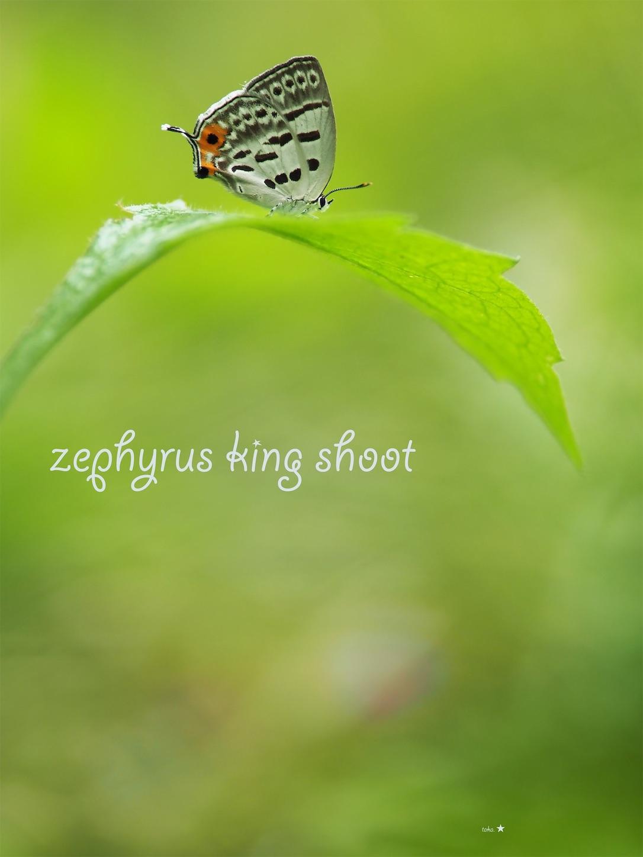 f:id:ButterflyTakaji:20190602194751j:image