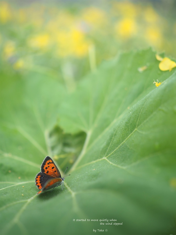f:id:ButterflyTakaji:20190607075954j:image