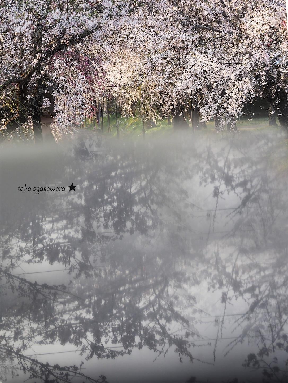 f:id:ButterflyTakaji:20190607080025j:image
