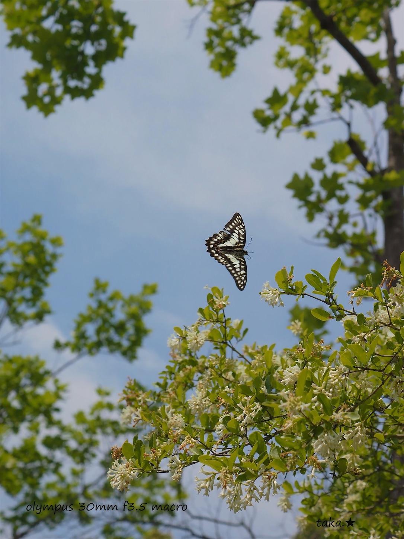 f:id:ButterflyTakaji:20190616005654j:image