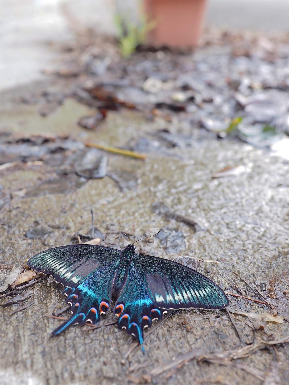 f:id:ButterflyTakaji:20190616005756j:image