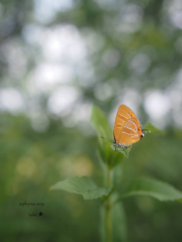 f:id:ButterflyTakaji:20190707150636j:image