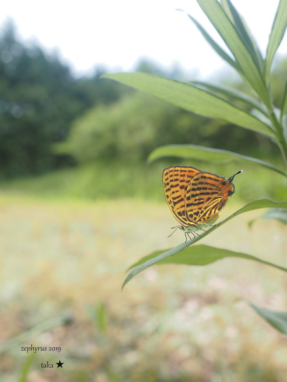 f:id:ButterflyTakaji:20190707150646j:image