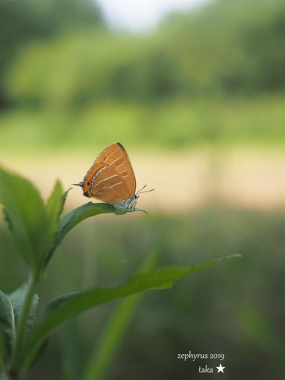 f:id:ButterflyTakaji:20190707150703j:image