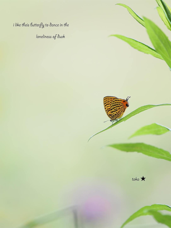 f:id:ButterflyTakaji:20190707150848j:image