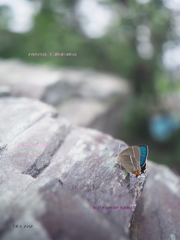 f:id:ButterflyTakaji:20190822011705j:image
