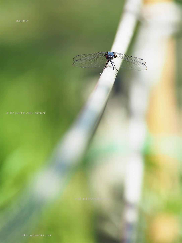 f:id:ButterflyTakaji:20190822011731j:image