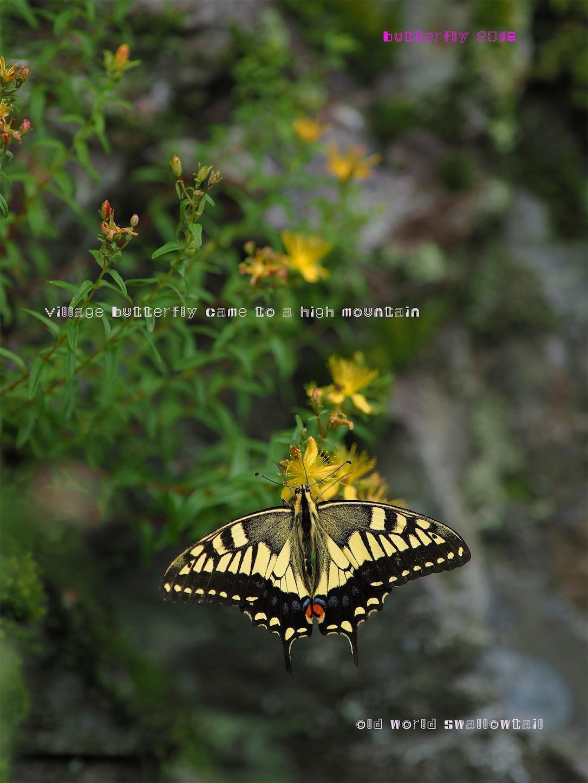 f:id:ButterflyTakaji:20190822011830j:image